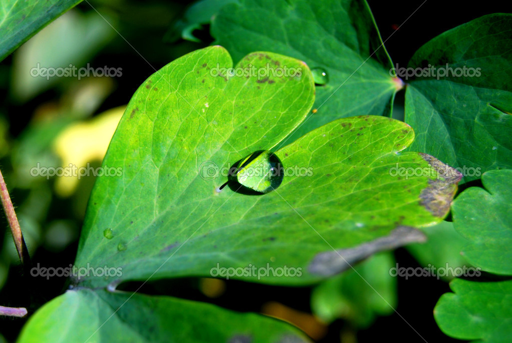 Water drop on green leaf in garden — Stock Photo #1118184