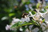 цветущий сад сочные деревьев яблони в солнечную погоду — Стоковое фото