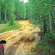 Automobile travel to wild forest in the — Foto de Stock
