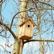 Starling bird house — Stock Photo