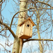 Stock Photo: Starling bird house