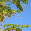 Palm leaves and a deep blue sky — Stock Photo