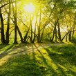 Royalty-Free Stock Photo: Rays of sun in summer forest