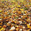 图库照片: Autumn leaves covering ground