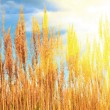 Grass with sun and blue sunny sky - Stock Photo