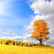Wonderful autumn - Stock Photo