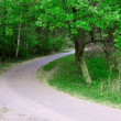 Road in summer green forest — Stock Photo