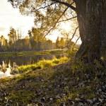 Autumn landscape — Stock Photo #1107999