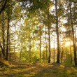 Sunshine in Autumn Forest — Stock Photo