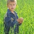 Young boy on green field grass — Stock Photo