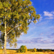 Royalty-Free Stock Photo: Landscape with tree and blue sky