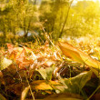 Fallen autumn leaves — Foto Stock #1108965