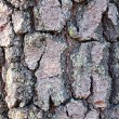 Wood bark texture — Stock Photo #1109006
