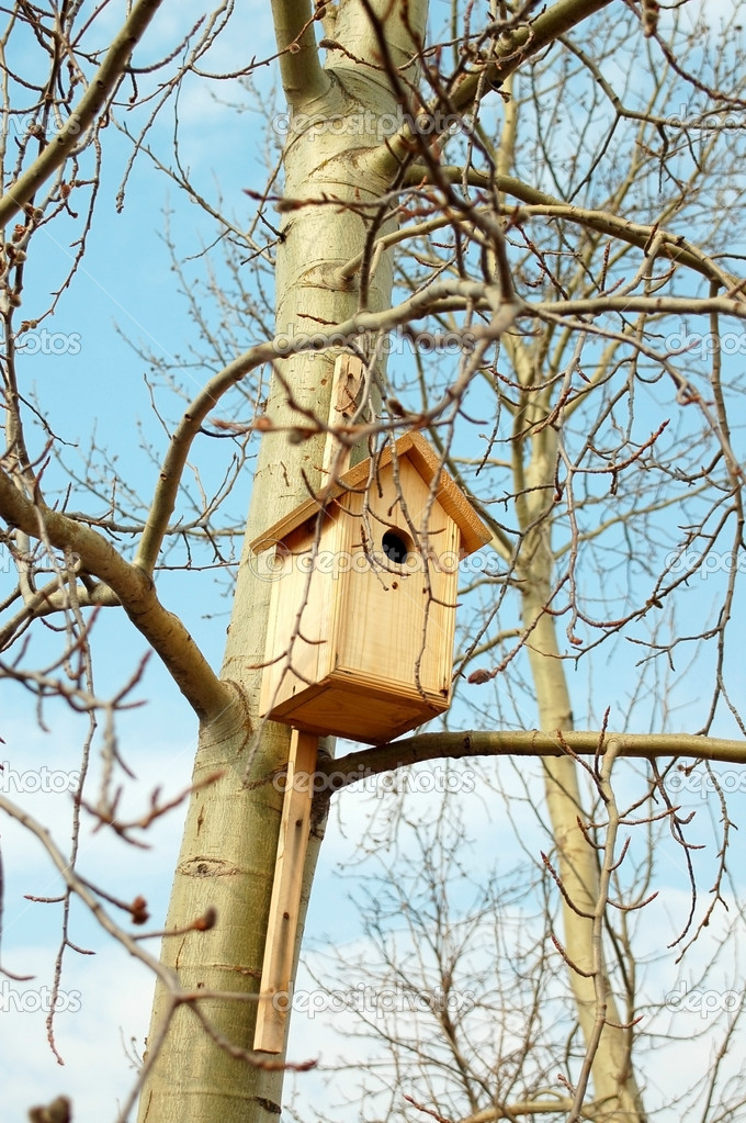 Starling bird house  Stock Photo #1101630