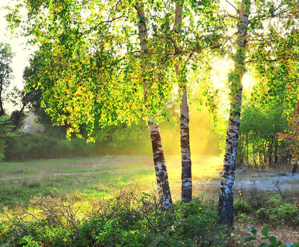Cамые красивые деревья в мире  много ФОТО