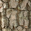 Wood bark texture — Stock Photo