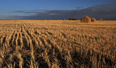 End of day over field — Stock Photo