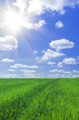 Field of grass and blue sky — Stock Photo