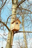 Starling fågelholk — Stockfoto