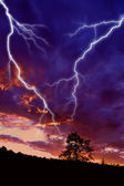 Tree silhouette and lightning — Stock Photo