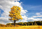 Wonderful autumn sun and yellow tree — Stock Photo