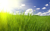 Green grass and cloudy sky — Stock Photo