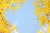 Frame by maple leaves in city park — Stock Photo