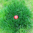 Red apple lying in grass — Stock Photo #1119632
