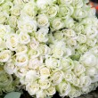 White roses — Stock Photo #1312789