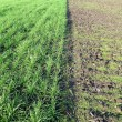 Stock Photo: Plowed and planted field