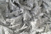 Branches silvery tree — Stock Photo