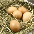Eggs in the nest — Stock Photo #2473859