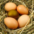Eggs in the nest — Stock Photo