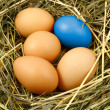 Stock Photo: Eggs in the nest