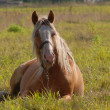 Horse on a meadow - Stockfoto