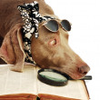 The dog has a rest after book reading — Stock Photo