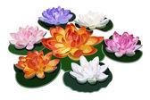 Seven lotuses. Illustration. — Stock Vector