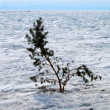 Stock Photo: Frozen Baikal Lake