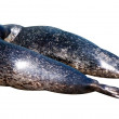 Two seals — Stock Photo