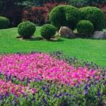 Garden — Stock Photo #1169610