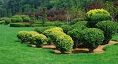 Garden — Stockfoto