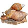 Two snails - Stock Photo