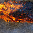 Stock Photo: Burning grass