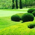 trädgård — Stockfoto #1181690