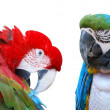 Stock Photo: Two parrots