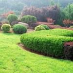 Garden — Stock Photo #1181757