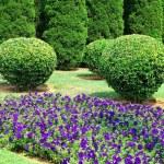 Garden — Stock Photo #1181881