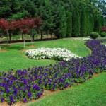 Garden — Stock Photo #1181889