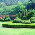 Garden — Stock Photo #1181900