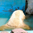 Polar bear — Foto Stock #1188029